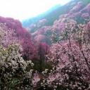 药王谷高山花海清凉避暑节