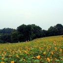 石象湖:夏季清凉度假好地方